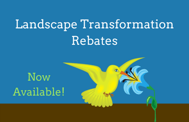 Landscape Transformation Rebates picture